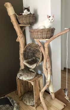 All natural cat tree handmade by Schnurrwerk (Germany) - Katzen - . All natural cat Cool Cat Trees, Cool Cats, Grand Chat, Diy Cat Bed, Cat Beds, Cat Tree House, Cat Towers, Cat Playground, Natural Playground