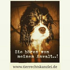 http://www.tierrecht-anwalt.de Ackenheil Anwaltskanzlei Die Tierrechtskanzlei #hunderecht #hundebiss #wesenstest #listenhunde #kampfhundeverordnung