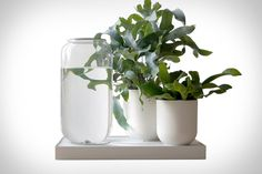 Buying beautiful plants is easy. Keeping them that way is not. Unless you have a Tableau Automatic Plant Watering Tray. This Dutch-designed system uses a wet-dry cycle to irrigate your plants in the same manner as nature. Just fill the...