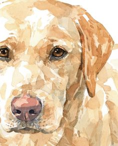 Yellow Lab Watercolor Limited Edition Print, labrador retriever painting Source by The post Yellow Lab Watercolor Limited Edition Print, labrador retriever painting appeared first on Sawyer Dogs. Watercolor Animals, Watercolor Paintings, Watercolor Illustration, Watercolour, Dog Portraits, Animal Paintings, Animal Photography, Equine Photography, Painting & Drawing