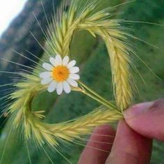 Good Morning Sister and all,have a great day,xxx God bless.take care ❤❤❤☀ Heart In Nature, Heart Art, I Love Heart, Happy Heart, Beautiful Flowers, Beautiful Pictures, Daisy Love, Heart Images, Heart Pics