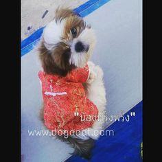 นองฟรงฟรงในชดเสอสนข ชดจนสแดง นารกมากๆคะ #reviewdogacat #chinessnewyear  line : dogacatthailand  www.dogacat.com  FB : dogacat  Fanpage : dogacatthailand Instagram : dogacat  #dogacat #reviewdogacat #เสอผาหมา #เสอสนข #เสอหมา #เสอผาสนข #เสอแมว #เสอผาแมว #แวนตาสนข #รองเทาสนข #puppyclothes #petstagram #puppy #petclothes #petsofinstagram #dogstagram #dogoftheday #dogdress #dogdaily #dogapparel #dogclothes #dogcute  #dogshoes #doghat #chihuahua #shihtsulovers #shihtzu #shihtsugram #ปลอกคอสนข by…