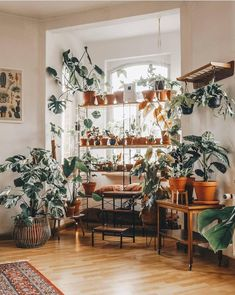 5 Tips for Trendy Home Decor on a Budget - Sweet Home And Garden Decor, Home And Garden, Trendy Home Decor, Plant Decor Indoor, Home Decor, Plant Decor, Plant Shelves, Room With Plants, Indoor Plants