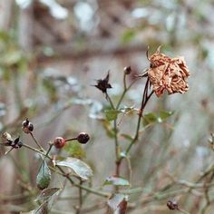 Cómo revivir una planta que está seca: Pruébalo