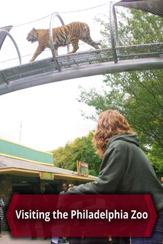 A trip to the Philly Zoo in Philadelphia, Pennsylvania is sure to excite both kids and adults. Learn more: http://uncoveringpa.com/visiting-the-philadelphia-zoo