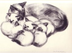Clare Newberry - LIlipus and Kittens