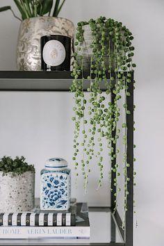 Terrarium Plants, Potted Plants, Indoor Plants, Fire Pots, Happy New Home, Boho Tapestry, Cool Plants, Houseplants, Interior Inspiration