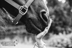 Horse Photographer - Photo shoot for a Friesian horse and a Shetland Pony 12 - - Horse Girl Photography, Equine Photography, Animal Photography, Pictures With Horses, Horse Photos, Photos Originales, Horse Portrait, Horses And Dogs, Friesian Horse