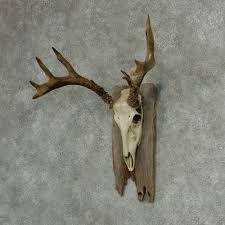 """Képtalálat a következőre: """"european deer mount"""""""