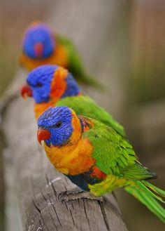 Top 10 Rare Colorful Birds Around the World