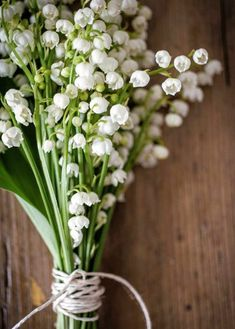 "Fleur de ""muguet"", Convallaria majalis, lily of the valley: a symbol of happiness, innocence & renewal, the perfect (wedding) bouquet. My Flower, White Flowers, Beautiful Flowers, Birth Flower, Spring Flowers, Fresh Flowers, Long Stem Flowers, Beautiful Pictures, Bunch Of Flowers"