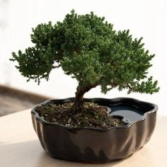 Bonsai glazed clay earth/water pot