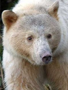 f6180bfb7d9 256 Best Bears images