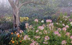 http://www.igpoty.com/competition10/images/800px/Beautiful_Gardens/Highlycom2.jpg