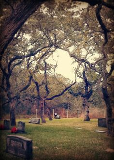 Through the trees in old cemetery - Lamar Cemetery in Rockport, Texas