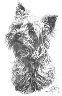 Yorkshire Terrier print by Mike Sibley