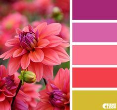 62 Ideas Exterior Paint Pink Color Combos For 2019 Color Schemes Colour Palettes, Colour Pallette, Color Palate, Color Combos, Beautiful Color Combinations, Design Seeds, World Of Color, Color Swatches, Color Theory