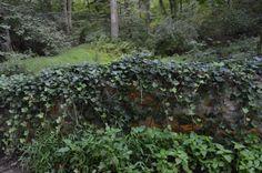 Ivy Covered Bridge at Stonecrest