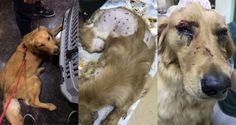 The golden retriever's owner posted on Chinese social media site Weibo that excessive force was used to catch and restrain his pet.