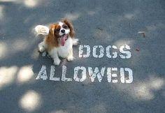 "What da mean ""No Dogs Allowed"" ?"