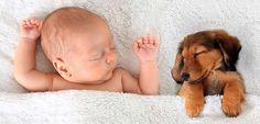 #Chiens et chats contre l'allergie et l'obésité ! - Santé sur le net (Blog): Santé sur le net (Blog) Chiens et chats contre l'allergie et…