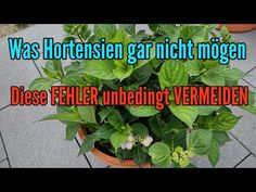 Plants, Gardening, Youtube, Yard Maintenance, Planting Flowers, Lawn And Garden, Plant, Youtubers, Youtube Movies