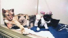 Mamãe gata andou através das chamas cinco vezes para resgatar seus gatinhos ,de um incêndio em um prédio em Brooklyn,,Nova Yorque.
