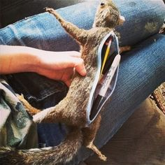 A Squirrel pen holder.   OMFG THATS AWESOME!