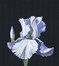 112 best white flower paintings images on pinterest flower art painting of a white iris in watercolour and gouache on black board by julie horner mightylinksfo