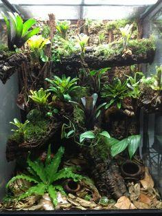 Terrarium Click the image to open in full size. Terrariums Gecko, Tree Frog Terrarium, Terrarium Reptile, Aquarium Terrarium, Garden Terrarium, Terrarium Tank, Tarantula Enclosure, Snake Enclosure, Planted Aquarium