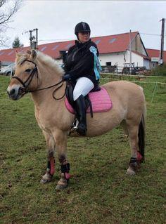g Horses, Animals, Animales, Animaux, Animal, Animais, Horse