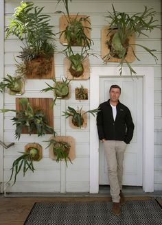 Staghorn Ferns Gosh we love Platycerium bifurcatum, the staghorn fern! Flora Grubb Gardens staff garden designer Daniel Nolan created this simple, beautiful, low-maintenance vertical garden at his own home in San Francisco.