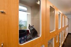 inside a veterinary clinic - Google Search