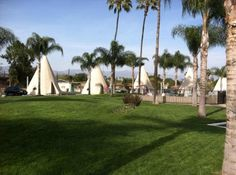 Groomed... Wigwam Motel, San Bernadino CA also in KY & AZ