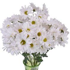 64 best white wedding flowers images on pinterest in 2018 white vero white daisy flower mightylinksfo