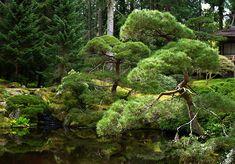Japanese Garden designed by Fujitaro Kubota @ Bloedel Reserve on Bainbridge Island in Seattle
