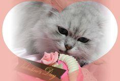 バレンタインもらったニャ♪/猫 ネコ cats  (Nestle PURINA ネスレ日本)