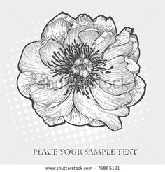 vector hand drawn illustration of a single peony by Anna Paff, via ShutterStock
