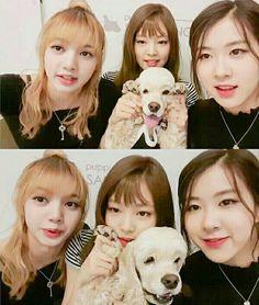 blackpink, lisa, jennie and rose