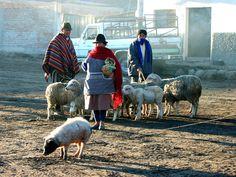 Indigenous Thursday market in Guamote | Intisisa