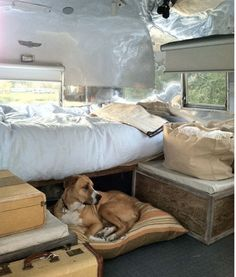 handsome dog in airstream        The walls were then stripped and polished, and…