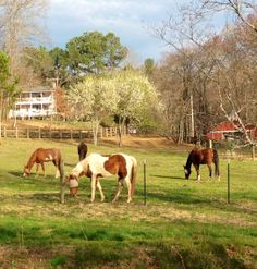 Springtime at Horse Creek Stable Bed and Breakfast.  The farm is waking up after a long cold winter here in the North Georgia Mountains.
