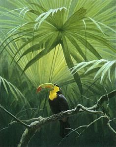 Tropical Tucan by artist Alan Bateman Tropical Art, Tropical Birds, Exotic Birds, Wildlife Paintings, Wildlife Art, Animal Paintings, Jungle Art, Illustration Art, Illustrations