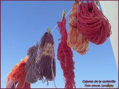 Colores de la cochinilla. #lanzarote #cochineal #naturaldye