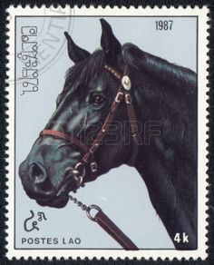Black horse from series: Horses, stamp printed in Vietnam ,circa 1987