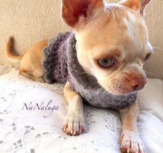 Crochet vêtements - fait main - chiot pull - blanc en laine chien pull - chiot chaton - Chihuahua - cadeau - vêtements pour Chihuahua - chiens et chats Chihuahua, French Bulldog, Dog Cat, Gallery, Cats, Crochet, Animals, Products, Dog Baby