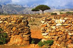 News - Welcome to Socotra, an island out of this world - The ...