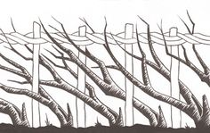 The art of hedge laying is a centuries-old skill for creating living, stock-proof fences – and although it requires hard work and patience, practice invariably makes perfect. Here we give y