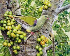 African Green-Pigeon – 1997 Johan Hoekstra Wildlife Art (Available Print) Tropical Art, Tropical Birds, Green Pigeon, African Animals, Wildlife Art, Bird Art, Fine Art Prints, Bird Species, Wild Life