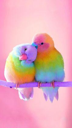 Cute Birds, Pretty Birds, Beautiful Birds, Animals Beautiful, Beautiful Babies, Beautiful Pictures, Baby Animals Super Cute, Cute Little Animals, Cute Funny Animals